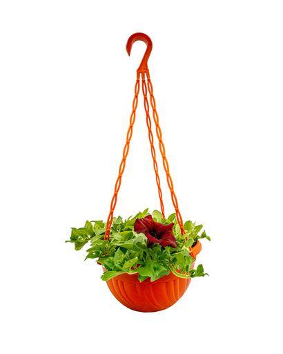 Beautinia Burgundy ( Hanging Pot)